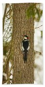 Great Spotted Woodpecker Beach Towel