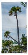 Palmetto Forest On Hunting Island Beach Beach Sheet