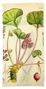 Illustrations Of The Flowering Plants And Ferns Of The Falkland Islands Beach Towel