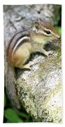 Chipmunk Beach Towel