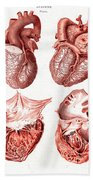 Heart, Anatomical Illustration, 1814 Beach Towel