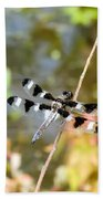 12 Spotted Skimmer Dragonfly 2 Beach Towel
