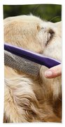 Dog Grooming Beach Towel by Photo Researchers Inc