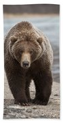 Grizzly Bear Ursus Arctos Horribilis Beach Towel