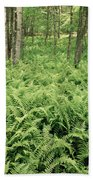 146112 Ferns In Pisgah Nat Forest V Beach Towel