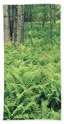 146113 Frens In Pisgah Nat Forest H Beach Towel