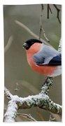 Eurasian Bullfinch Beach Towel