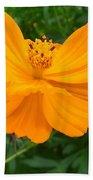 Australia - Yellow Flowers Of The Cosmos Carpet Beach Towel