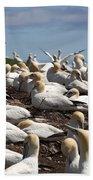 Gannet Colony Beach Towel