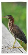 81- Green Heron Beach Towel