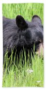 American Black Bear Yellowstone Usa Beach Towel