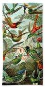 1899 Hummingbird Species Art Forms Of Nature Print Beach Towel