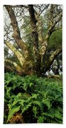 1b6339 Frens And Oaks On Our Mountain Beach Towel