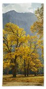 1m6611-oak Trees And Middle Cathedral Rock In Autumn Beach Towel