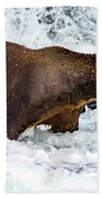 Alaska Brown Bear Beach Towel