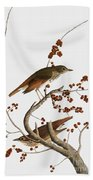 Audubon: Thrush Beach Towel