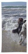 Australia - Border Collie Runs Out Of The Surf Beach Towel