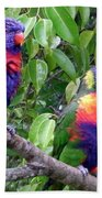 Australia - Two Brightly Coloured Lorikeets Beach Towel