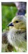 Baby Goose Chick Beach Towel