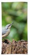 Beautiful Nuthatch Bird Sitta Sittidae On Tree Stump In Forest L Beach Towel