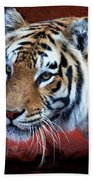 Bengal Tiger Beach Sheet