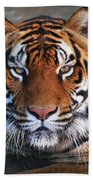 Bengal Tiger Laying In Water Beach Towel