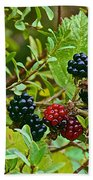 Berries In Vicente Perez Rosales National Park Near Puerto Montt-chile  Beach Towel