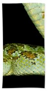 Blotched Palm Pitviper Beach Towel