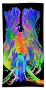 Brain Fiber Tracts, Dti Scan Beach Towel