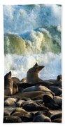 Cape Fur Seals Arctocephalus Pusillus Beach Towel