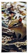 Chipmunk At Heckrodt Beach Towel