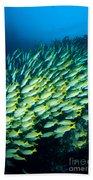 Coral Reef Scene Beach Towel