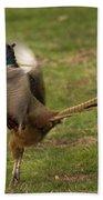 Crowing Pheasant Beach Towel