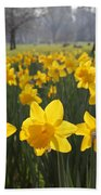 Daffodils In St James Park London Beach Towel