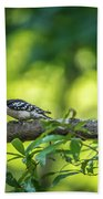 Downy Woodpecker In The Wild Beach Towel