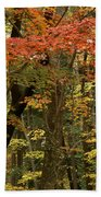 Forest In Autumn Beach Towel