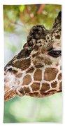 Giraffe Feeding On Green Leaves Of Lettuce Beach Towel