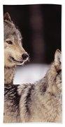 Gray Wolves Beach Towel