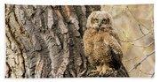Great Horned Owlet  Beach Towel