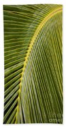 Green Palm Leaf Beach Towel