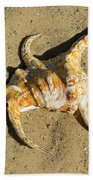 Lambis Arthritica Spider Conch Beach Towel