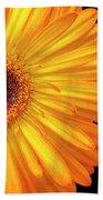 Macro Shot Of Flower Beach Towel