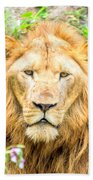 Majestic Lion Beach Towel
