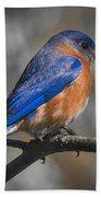 Male Eastern Bluebird Beach Sheet