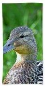Mallard Duck Hen Beach Towel