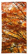 Maple Tree Foliage Beach Towel