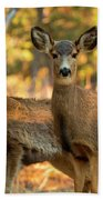 Mule Deer In The Woods Beach Towel