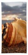 North Shore Seashell Beach Towel