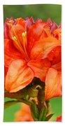 Office Art Prints Azaleas Botanical Landscape 11 Giclee Prints Baslee Troutman Beach Towel