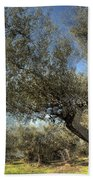 Olive Trees Beach Towel